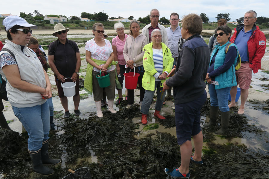 Découvertes-des-algues-sur-l'estran